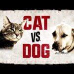 Cat vs Dog Classification